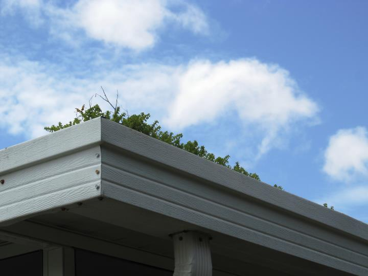 Picture of neglected gutter with vegetation growing out of it.
